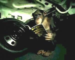 trunk-monkey